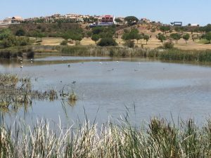Los lagos del golf